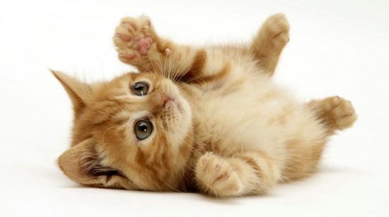 Mały kotek.