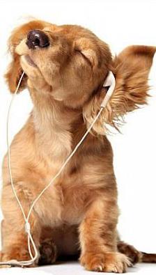 Pies ze słuchawkami.