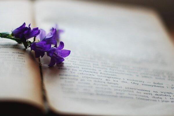 Książka i kwiat